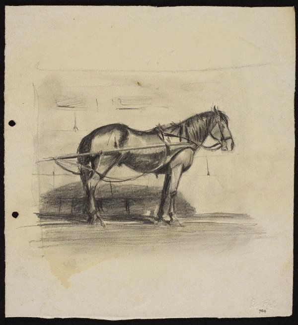 An image of Cab horse in traces