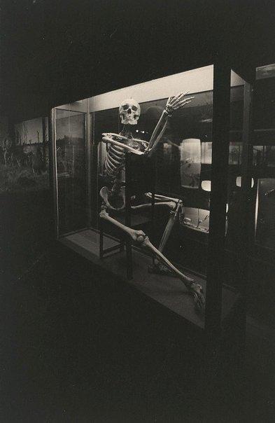 An image of Skeleton, Hobart Museum, Tasmania by Lewis Morley