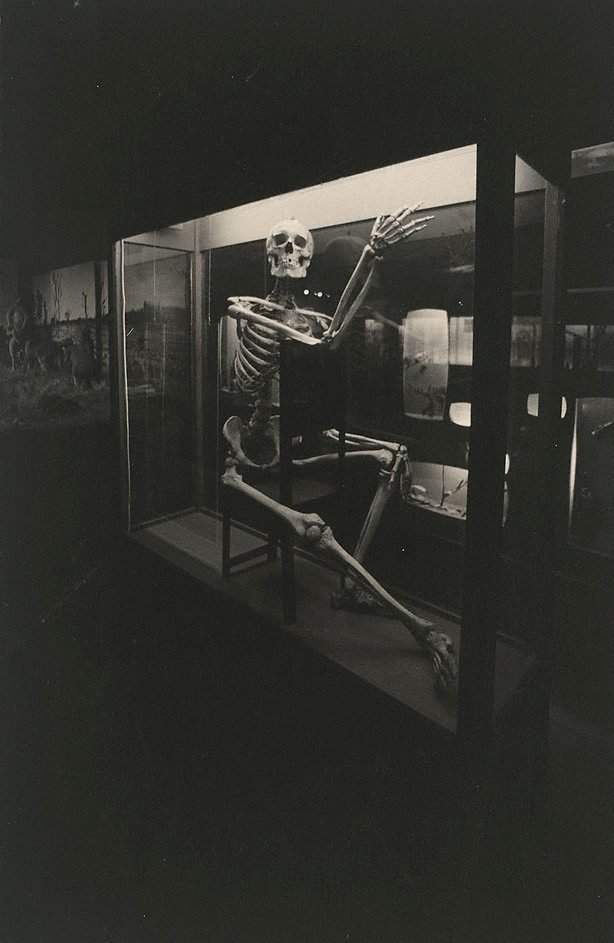 An image of Skeleton, Hobart Museum, Tasmania