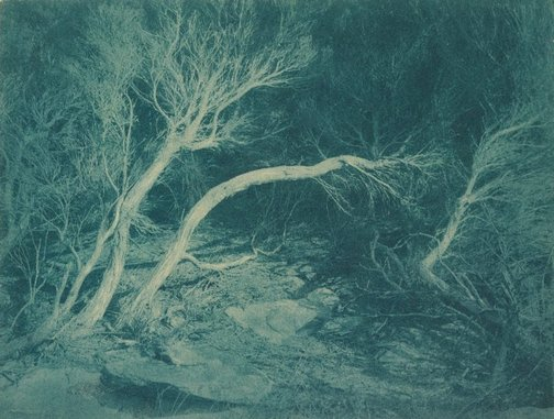 An image of Untitled (Marley Beach Ti-Trees) by William Robert David Howells