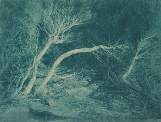 An image of Untitled (Marley Beach Ti-Trees)