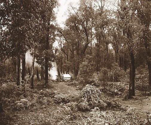 An image of Splitters hut, Morley's Track, Fernshaw by Nicholas Caire