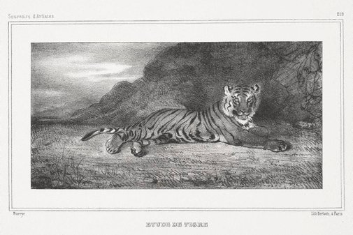 An image of Study of a tiger by Antoine-Louis Barye