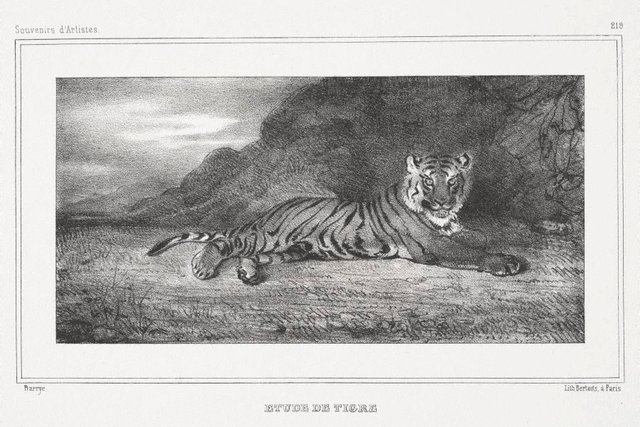An image of Study of a tiger