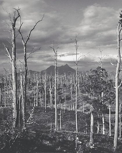 An image of Mount Warning, northern New South Wales by Axel Poignant