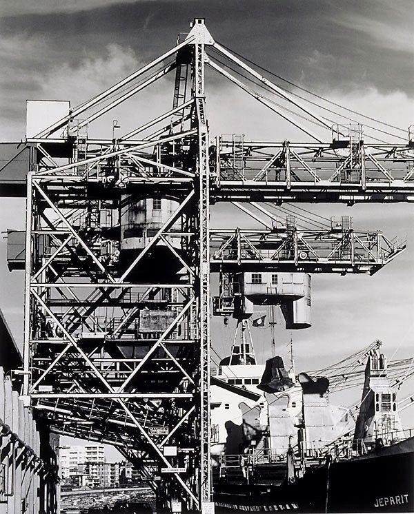 An image of Sugar cranes