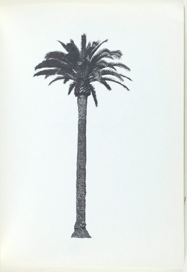 An image of A few palm trees