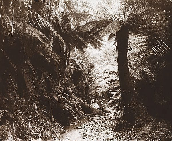 An image of Miss Kirkwood's Gully, Gilderoy