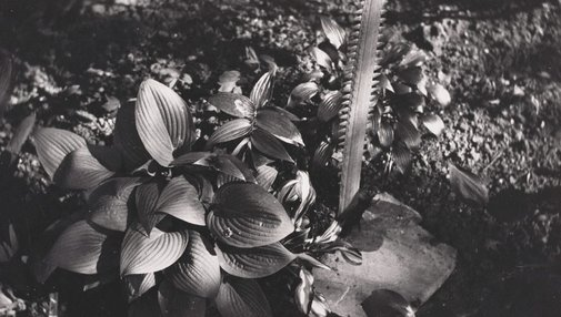 An image of Border plants and the sword of a sword-fish by Paul Nash