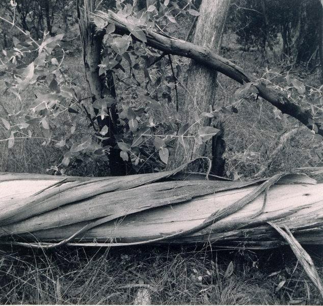 An image of triangular stump