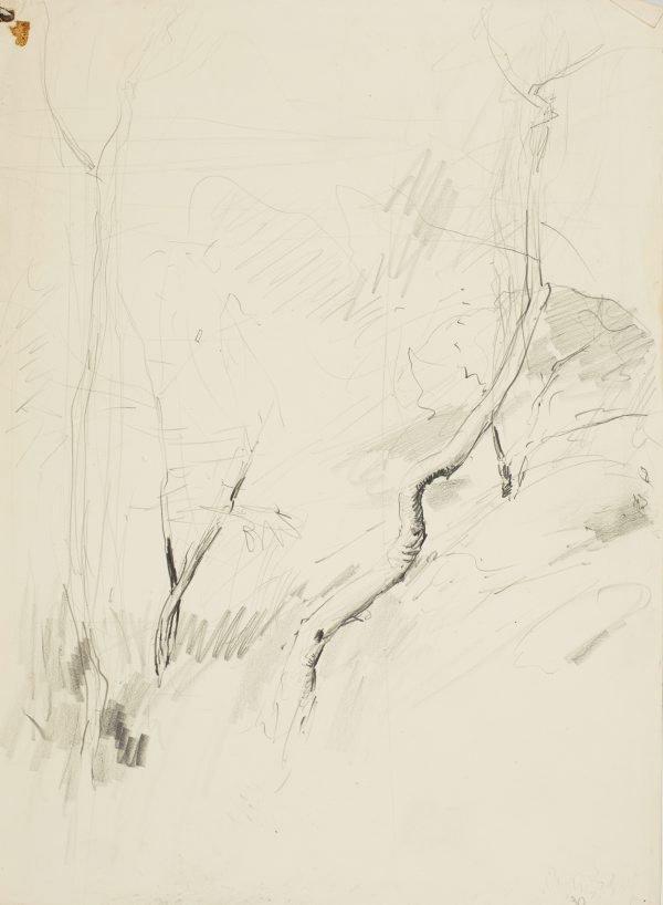 An image of A bush sketch