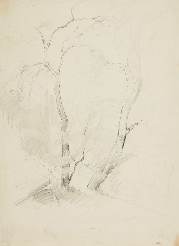 An image of recto: Two trees verso: Saddleback with Werri lagoon