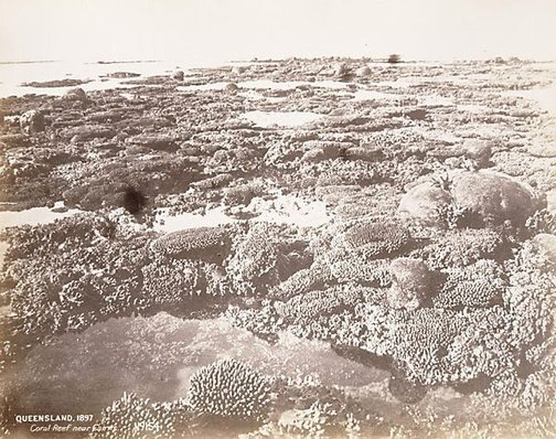 An image of Coral reef near Cairns by Unknown