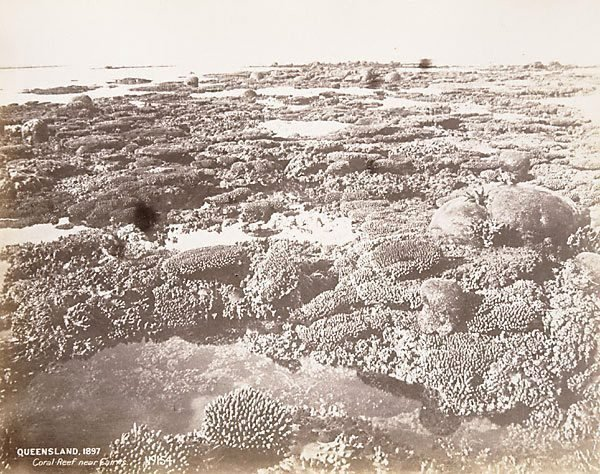 An image of Coral reef near Cairns