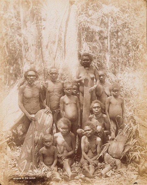 An image of Cairns District Aboriginals by Unknown