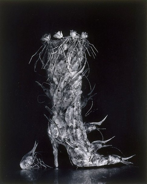An image of Boot of shrimps by Michiko Kon