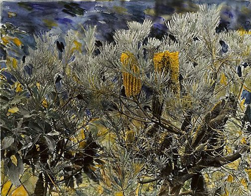 An image of Banksia, Mountain lagoon by Micky Allan
