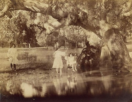 An image of Blue gums by Unknown, Kerry & Co
