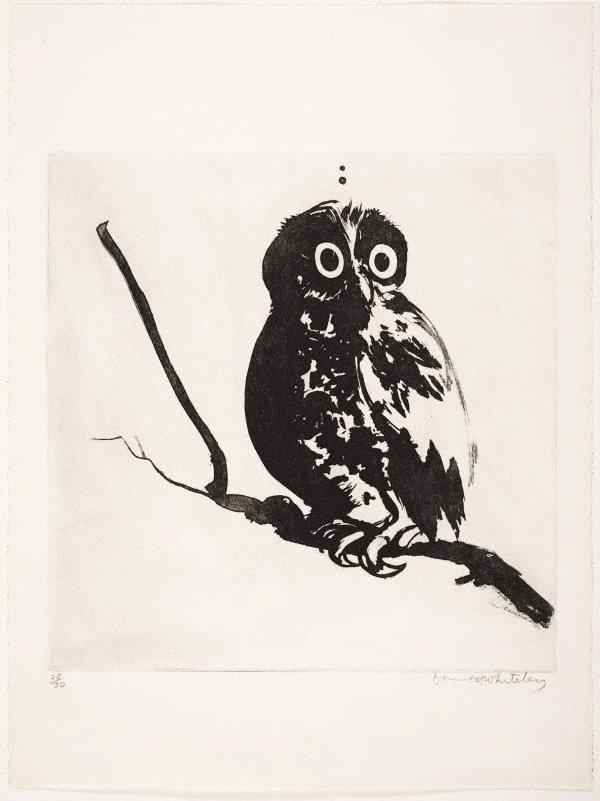 An image of Startled (owl)