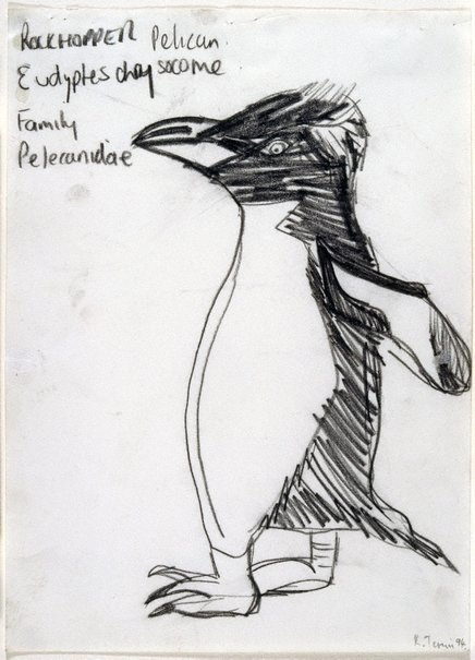 An image of Untitled (Rockhopper Pelican) by Kathy Temin