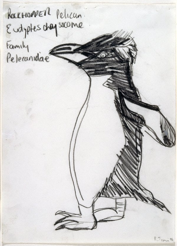 An image of Untitled (Rockhopper Pelican)