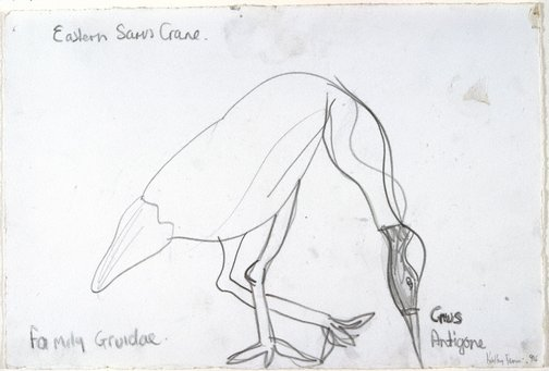 An image of Untitled (Eastern Saris Crane) by Kathy Temin
