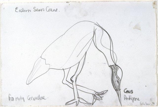 An image of Untitled (Eastern Saris Crane)