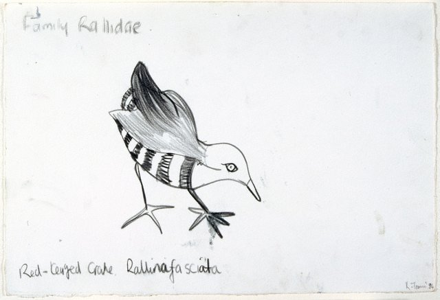 An image of Untitled (Red-Legged Crane)