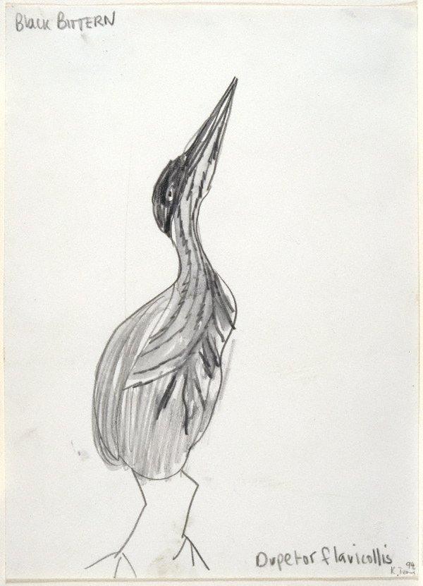 An image of Untitled (Black Bittern)
