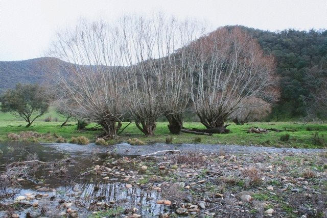 An image of 2. Near Corryong