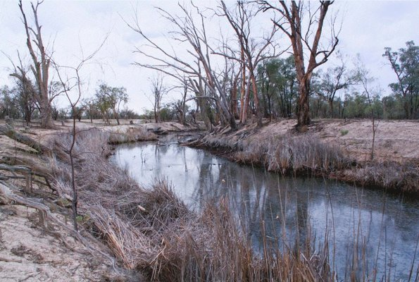 Alternate image of 7. Bottle Bend near Mildura by Bonita Ely