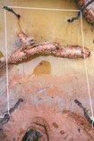 An image of 7. Bottle Bend near Mildura by Bonita Ely