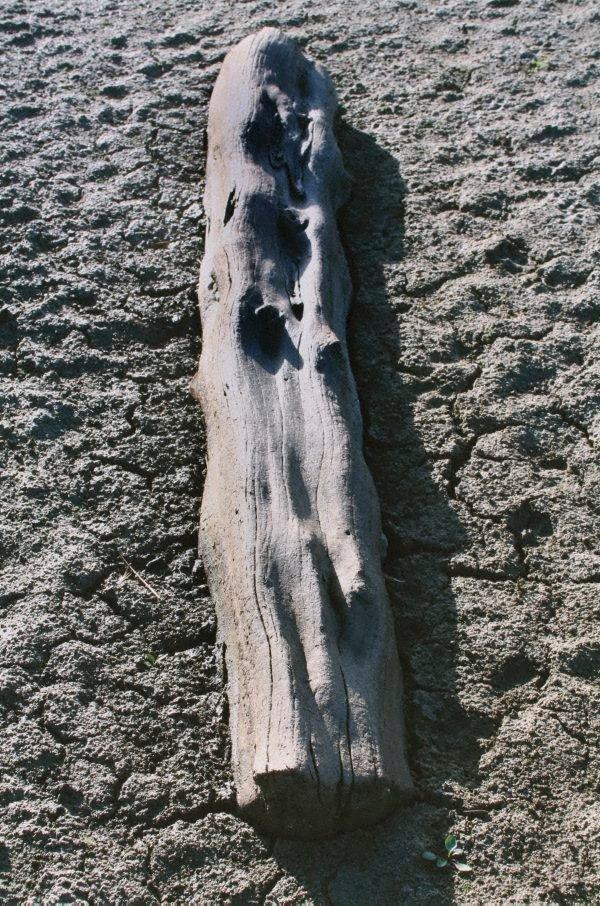 An image of 8. Near Swan Reach, South Australia