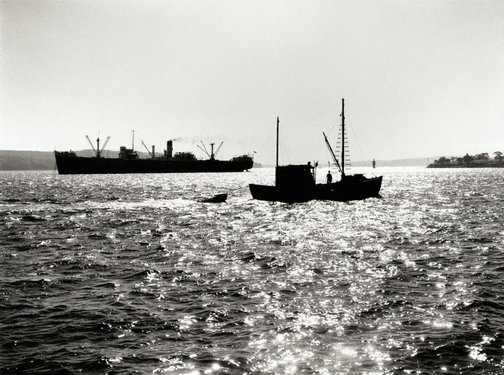 An image of Fishing trawler, Sydney Harbour by David Moore