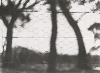 AGNSW collection Olive Cotton Through the fence circa 1934, printed 1980