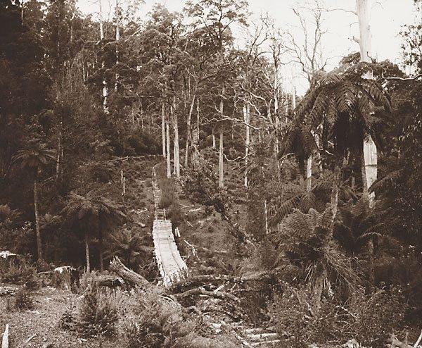 An image of Timber tramway at Warburton