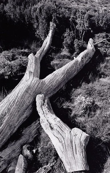 An image of Fallen tree, Cradle Mountain, Tasmania by David Moore