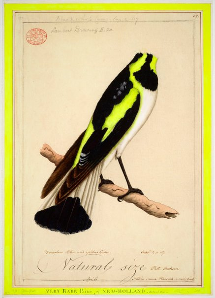 An image of A very rare bird by Joan Ross