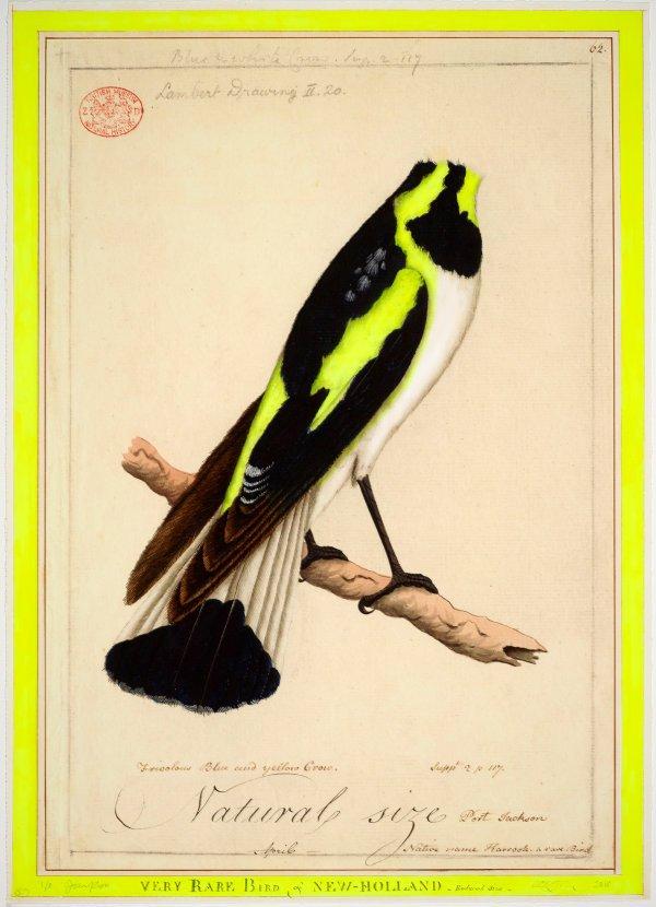 An image of A very rare bird
