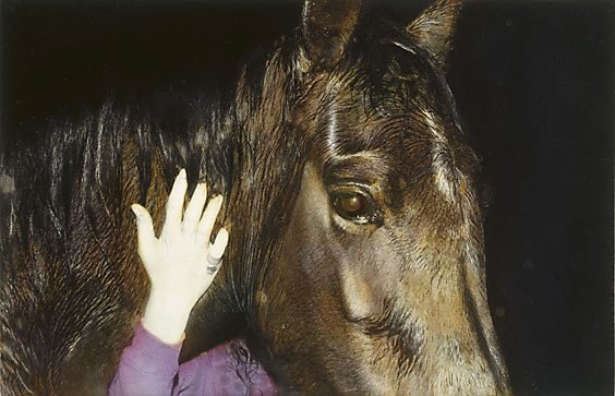 An image of Untitled (horse and hand)