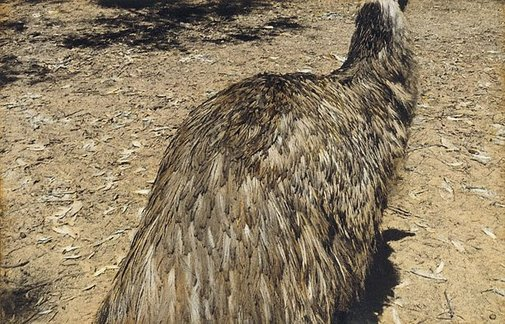 An image of Untitled (emu) by Kate Breakey