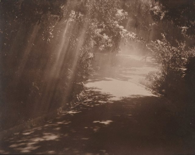 An image of Untitled (Pathway through gardens with light rays)