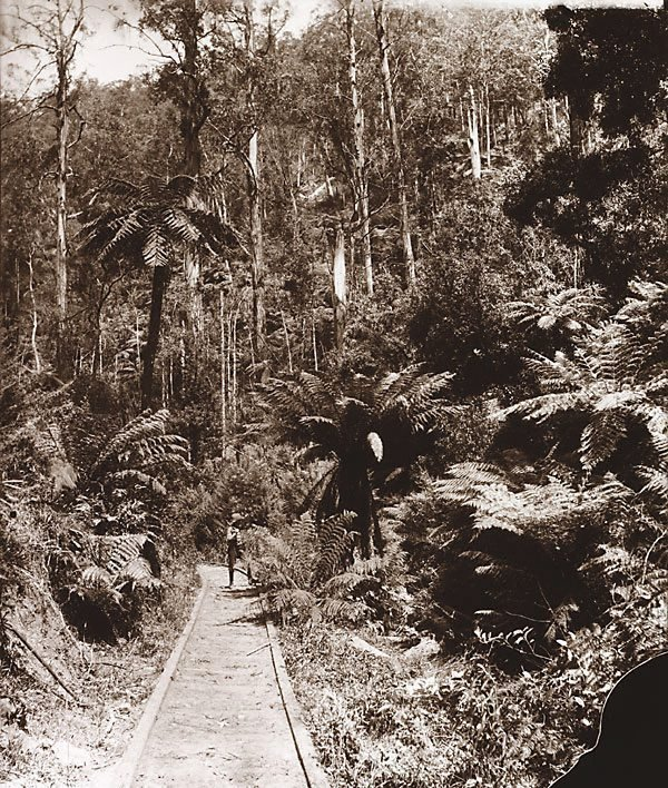 An image of Timber tramway at Warburton