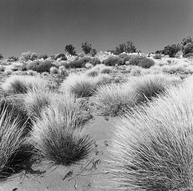 An image of Near Dullingari, South Australia