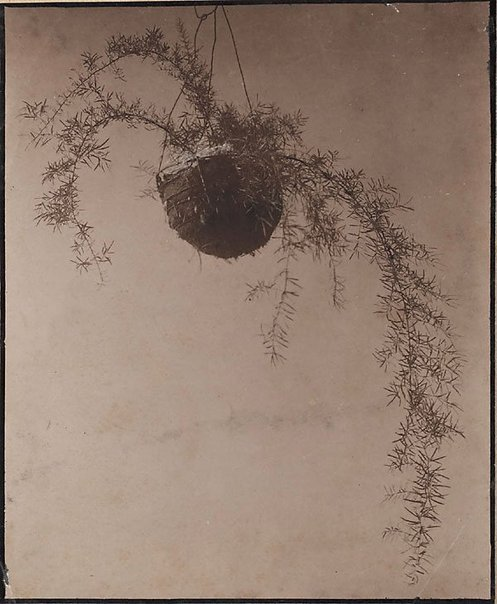 An image of Untitled (Hanging basket) by Norman C Deck