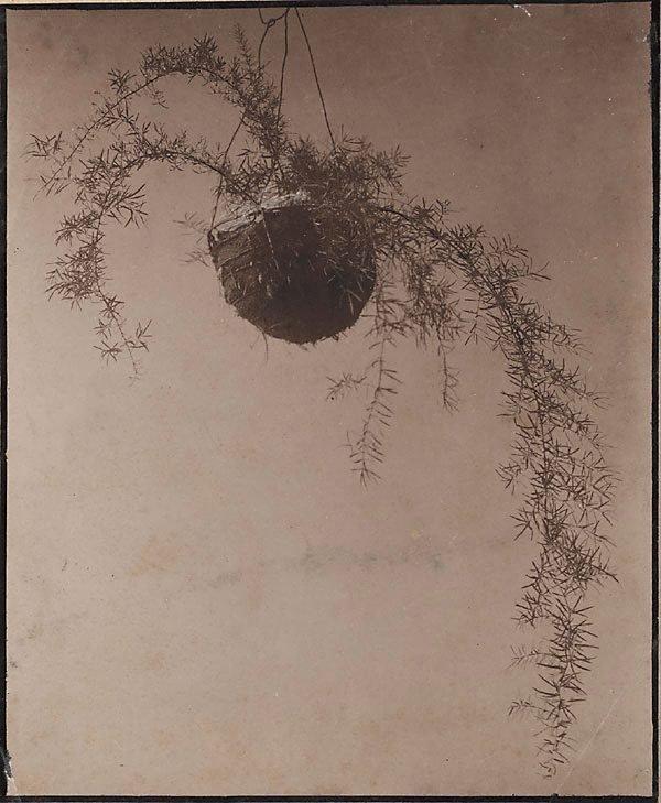 An image of Untitled (Hanging basket)