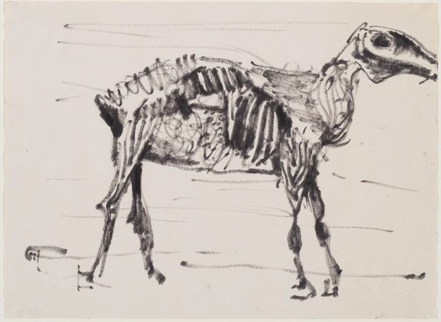 An image of Study of a desiccated horse