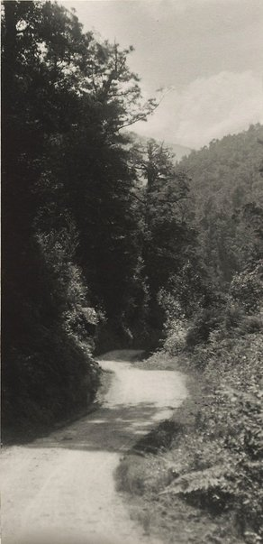 An image of Untitled (Roadway through forest, New Zealand) by Norman C Deck
