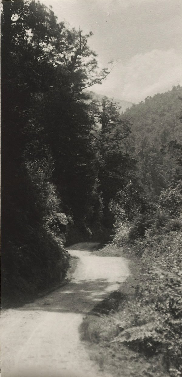 An image of Untitled (Roadway through forest, New Zealand)