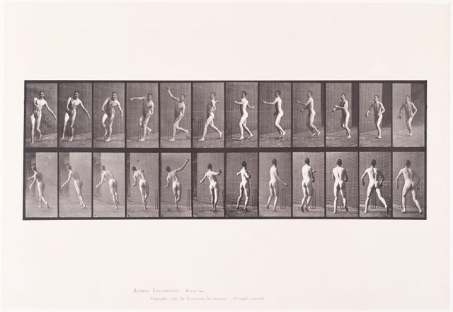 An image of Animal Locomotion - An Electrophotographic Investigation of Consecutive Phases of Animal Movements. Plate 290. Cricket, overarm bowling [Vol. 2 Males (Nude)]